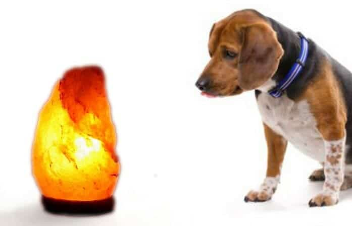 Are Himalayan Salt Lamps Safe for Pets Dog Bird