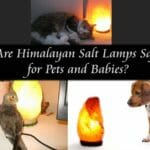 Are Himalayan Salt Lamps Safe for Pets and Babies