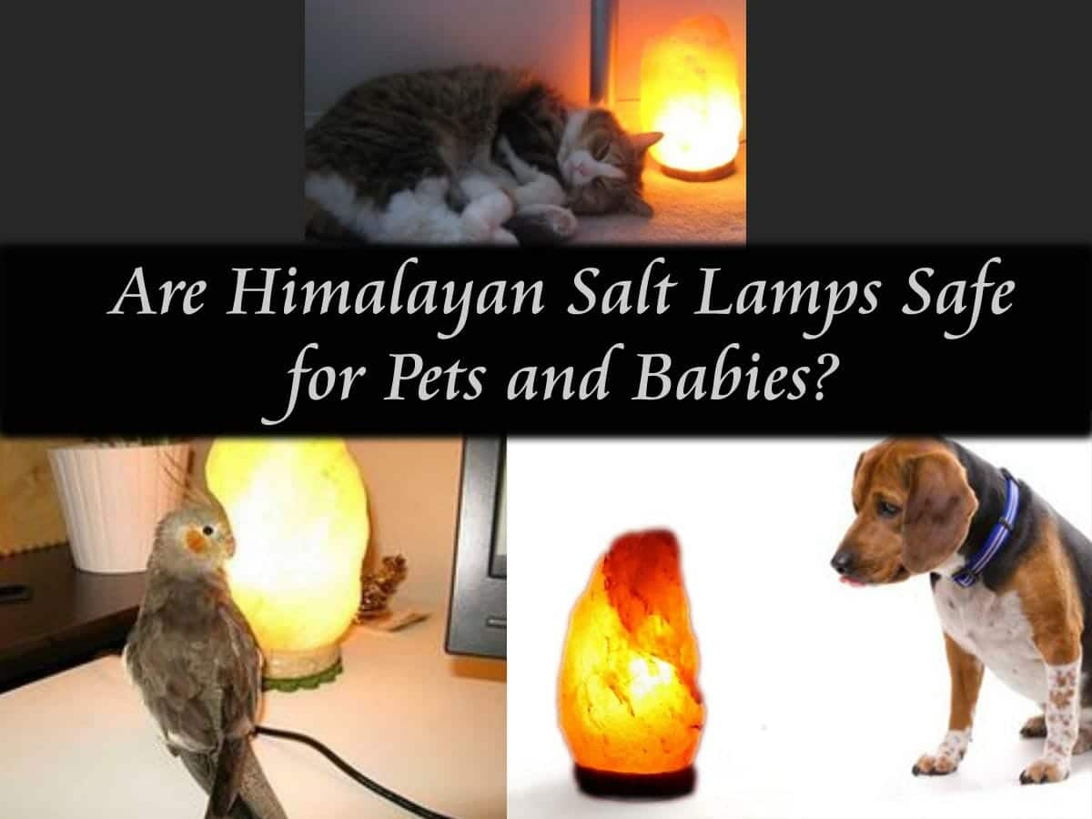 Are Himalayan Salt Lamps Safe for Pets and Babies? Himalayan Salt Lamp Guide