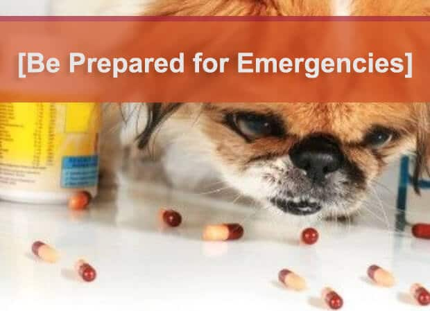Recovery of Salt Poisoning in Dogs