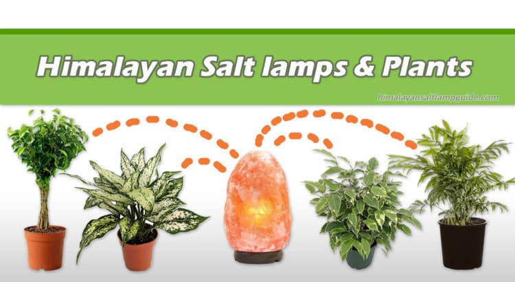 Are salt lamps safe for plants