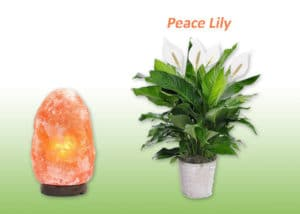 Peace Lily plant and Salt lamp